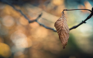 ветки, ветка, leaves wallpapers, Bokeh wallpapers, macro wallpapers, leaf w ...