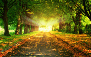 Trees, nature, leaves, деревья, majestic, beautiful, закат, sunset, road, l ...