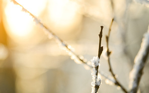 bokeh, macro, snow, nature, боке, природа, ветки, Макро, снег, branches