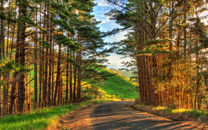 road, colorful, Nature, landscape, sky, hdr, view, colors, trees, path, sce ...