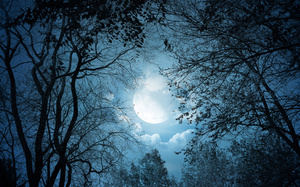 night, ночь, Moonlight, trees, moon, nature, landscape, лунный свет, clouds