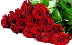 nice, rose, cool, Flower, pretty, drops, bouquet, lovely, wet, roses, beautiful, flowers, red roses