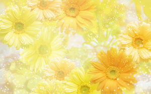 Желтый, yellow, flowers, фон, цветы